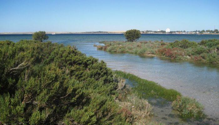 Coffin Bay (13)