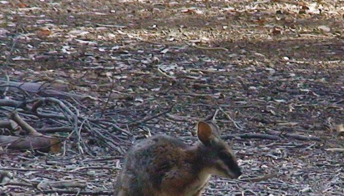 Kangaroo Island (2)