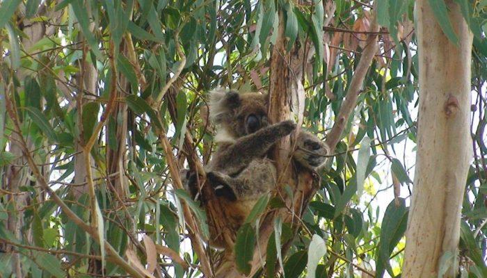 Kangaroo Island (22)