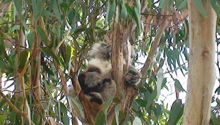 Kangaroo Island (23)