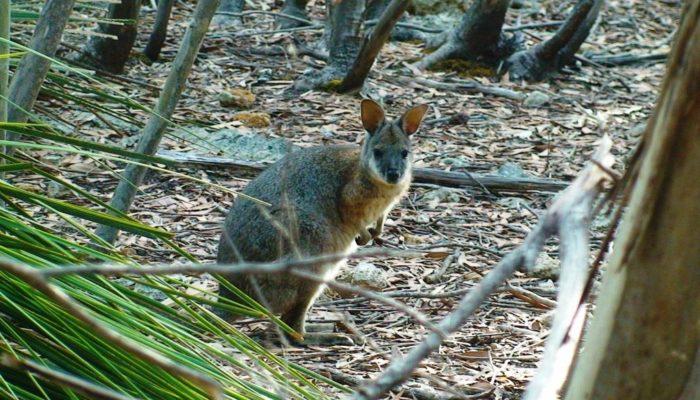 Kangaroo Island (3)