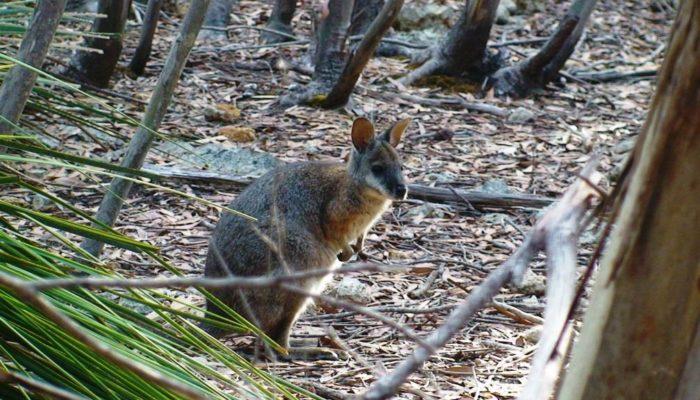 Kangaroo Island (4)