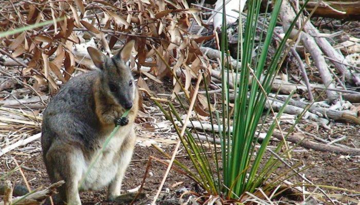 Kangaroo Island (7)