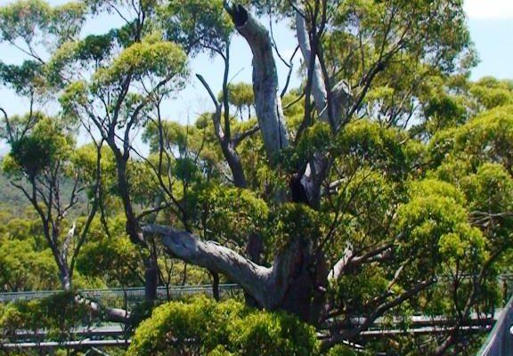 Mount Barker (5)