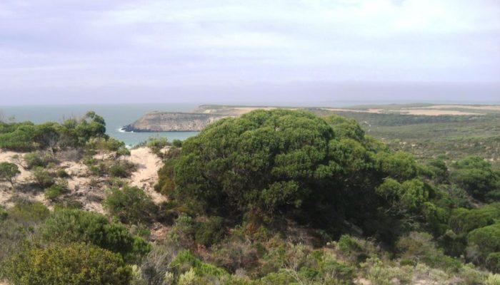 Mount Barker (60)