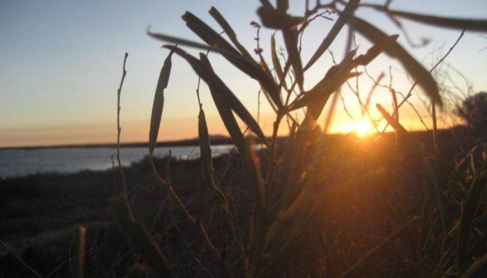 Port Augusta (16)