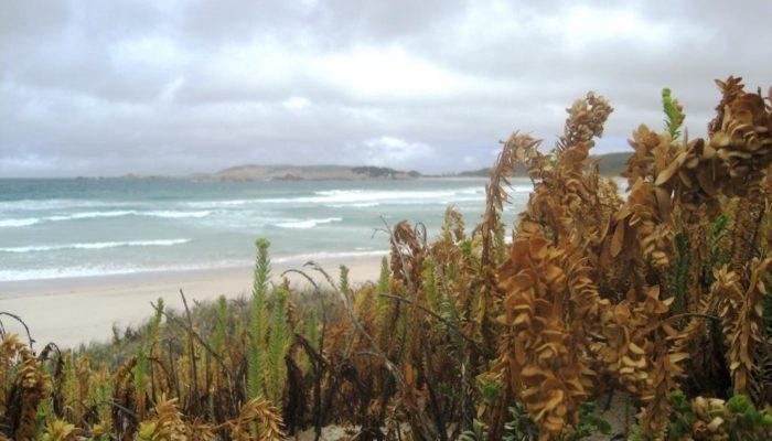 Streaky Bay (4)